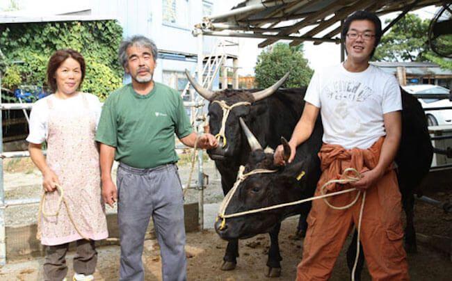 japanese wagyu | wagyu beef | what is wagyu beef